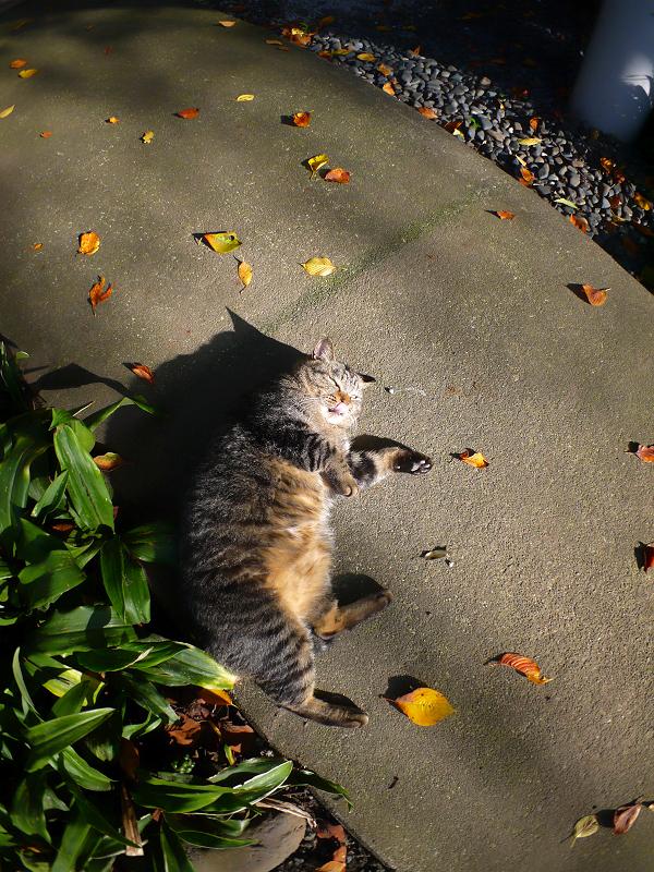 日差しを受けて嬉しそうなキジトラ猫3