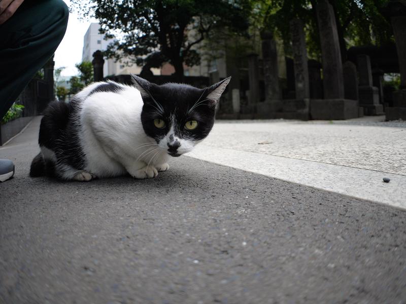 ローアングルで無表情な白黒猫1