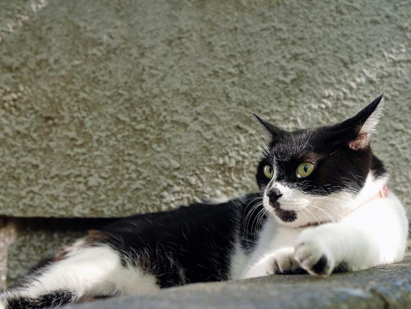 日陰の白黒猫3