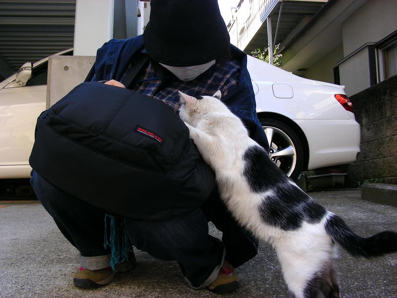 膝に手をかける白黒の猫2