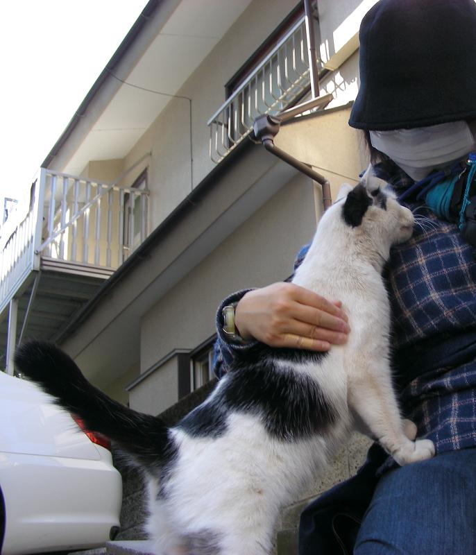 膝に手をかける白黒の猫3
