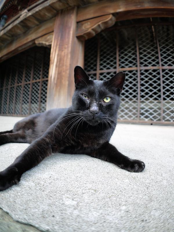 犬走りで緊張した黒猫1