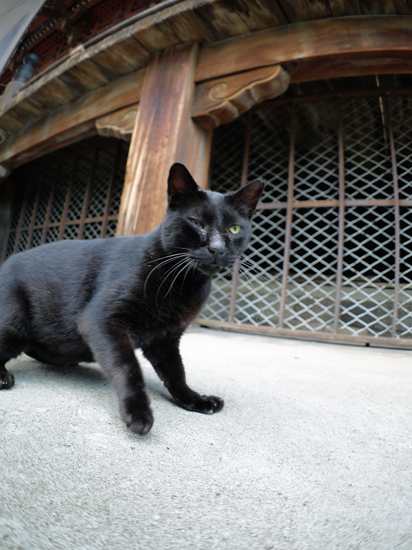 犬走りで緊張した黒猫2