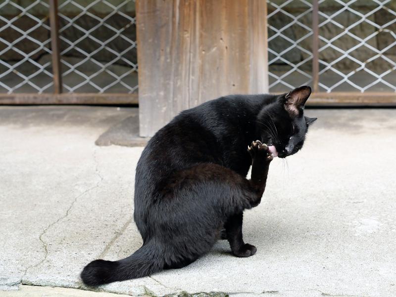 犬走りで緊張した黒猫3