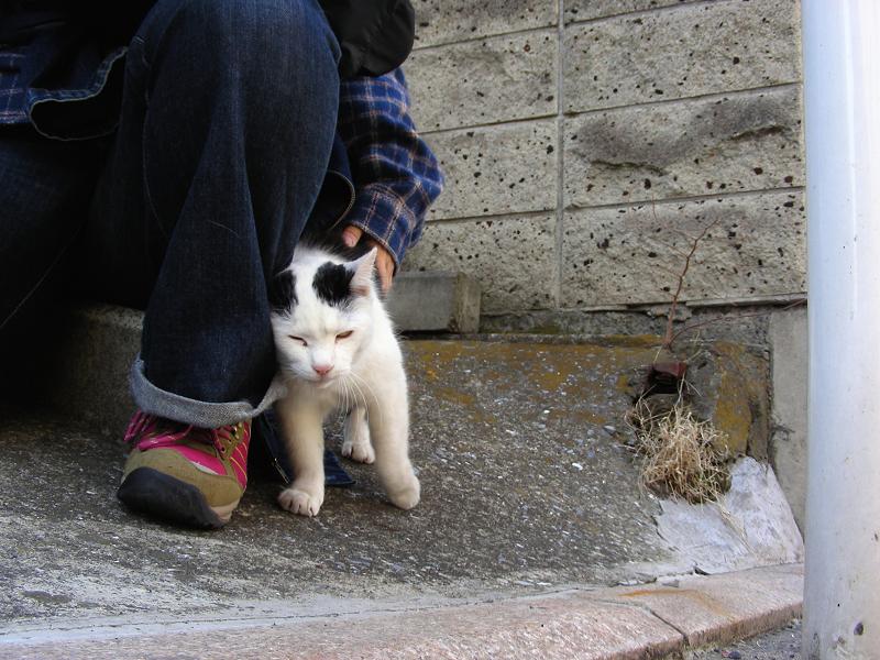 足元の白黒猫1