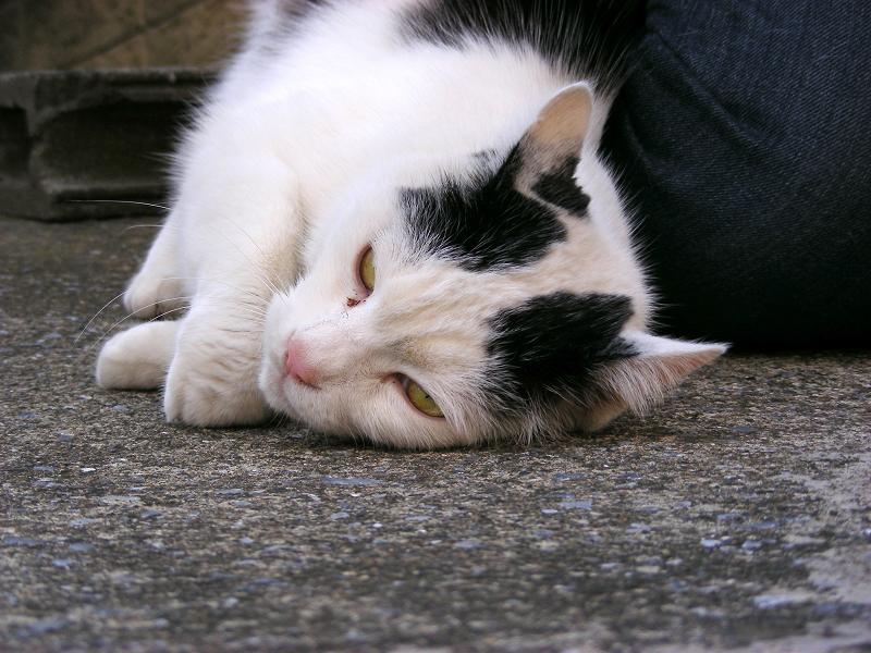 足元の白黒猫3