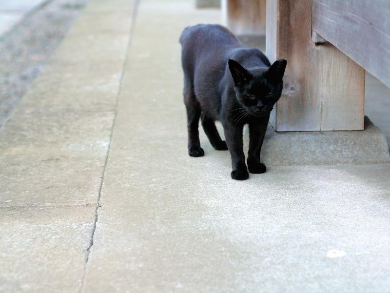 帰って来た黒猫1
