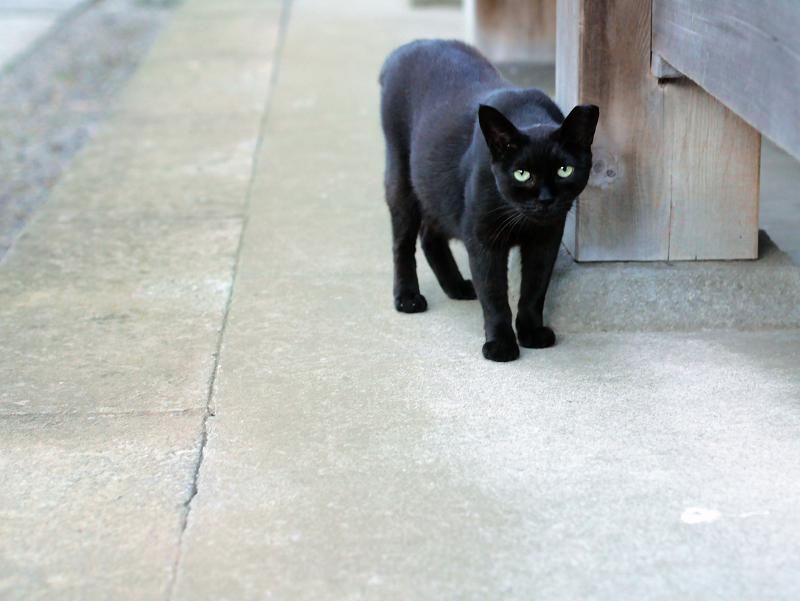 帰って来た黒猫2
