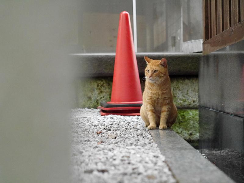 座ってる茶トラ猫