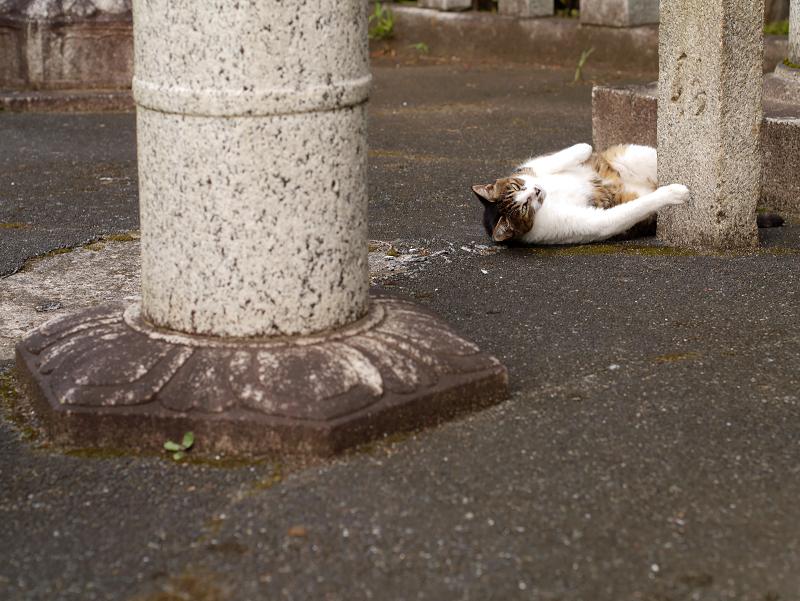 石灯籠柱とキジ白猫1