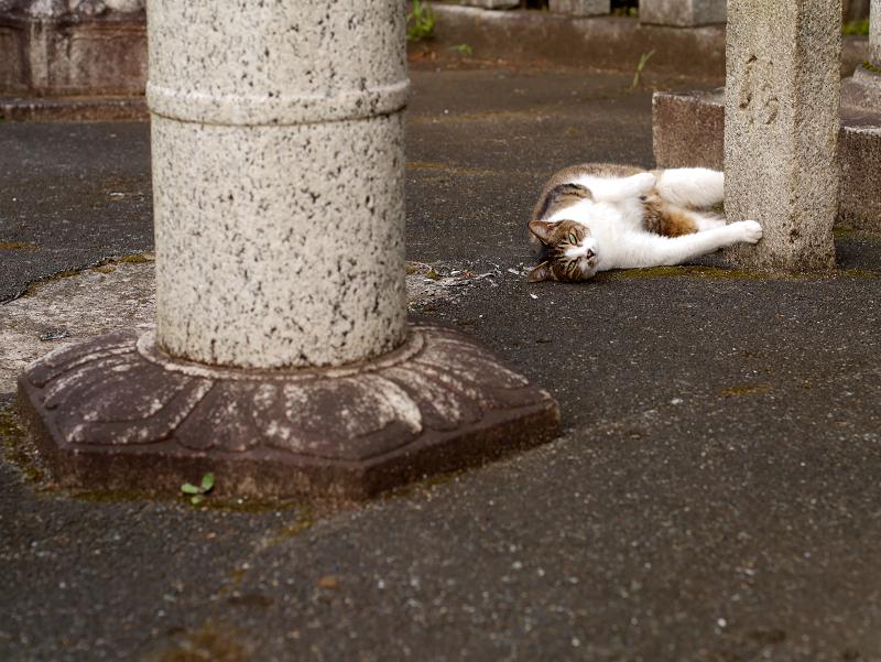 石灯籠柱とキジ白猫2