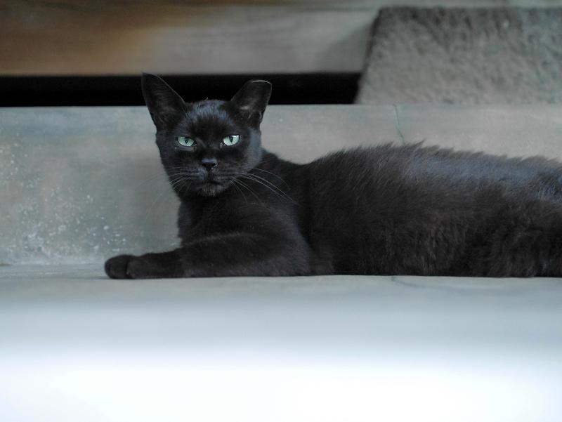 腹ばってる黒猫2