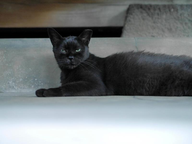 腹ばってる黒猫3