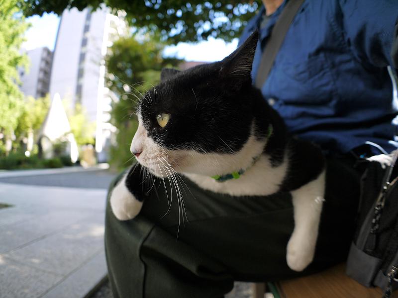 暑い日にも膝に乗った黒白猫1