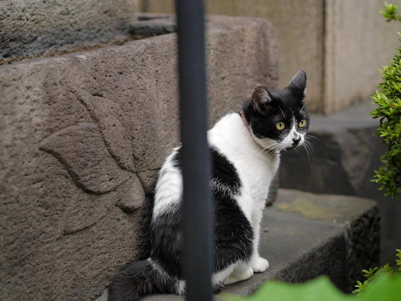 白黒猫の好きな場所1