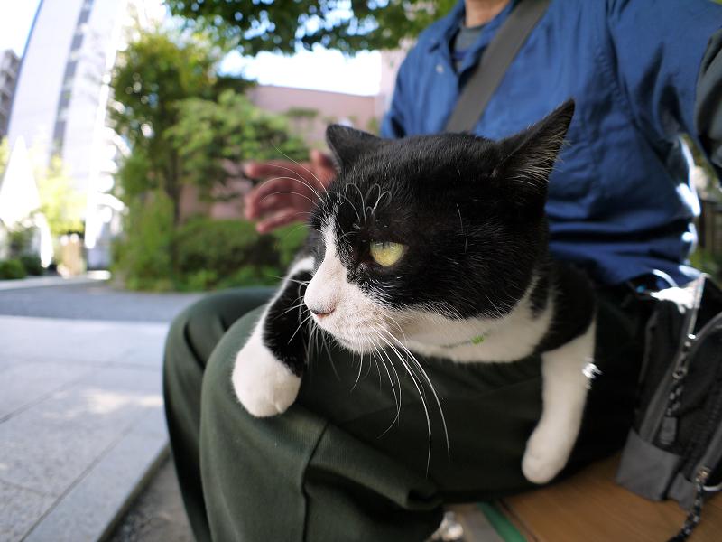 暑い日にも膝に乗った黒白猫2