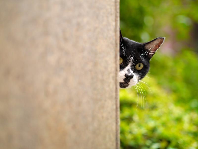 白黒猫の好きな場所2
