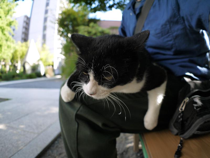 暑い日にも膝に乗った黒白猫3
