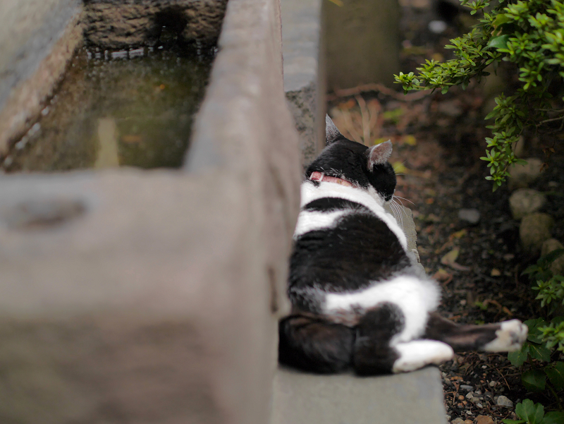 白黒猫の好きな場所3