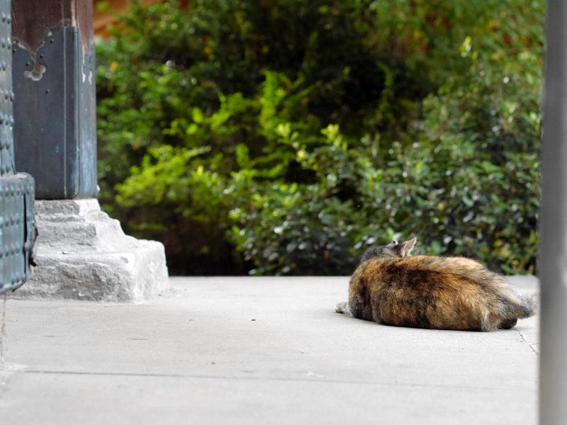 濡れ縁のサビ柄猫1