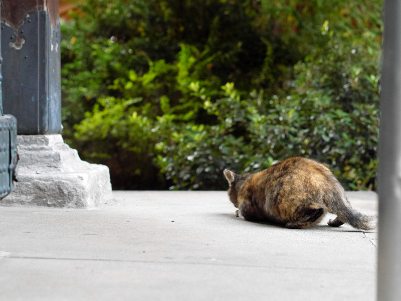 濡れ縁のサビ柄猫2