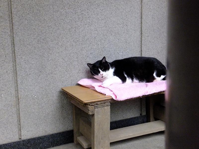 寝ていた黒白猫