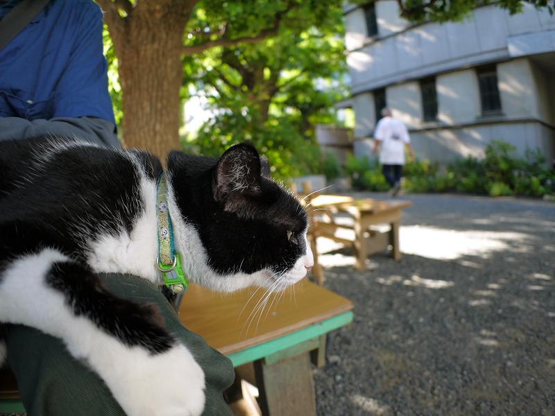 膝で垂れ始めた黒白猫2