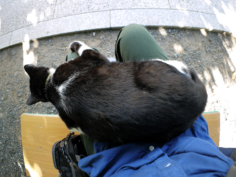 膝で垂れ始めた黒白猫3
