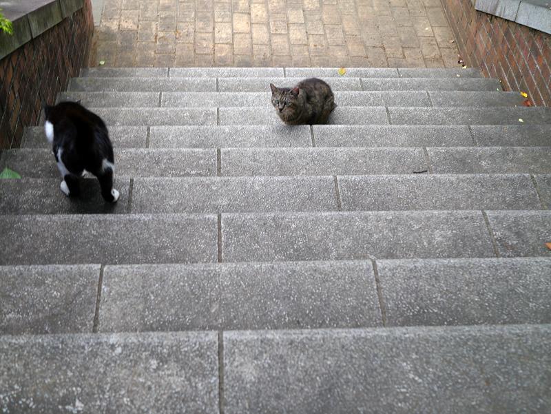 階段の猫たち1