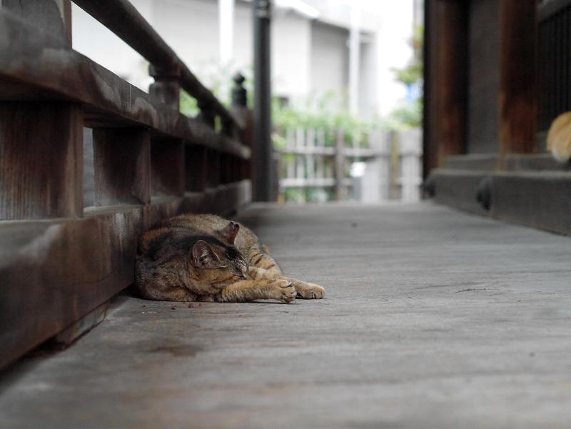 濡れ縁のサビ柄猫