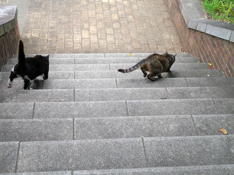階段の猫たち2