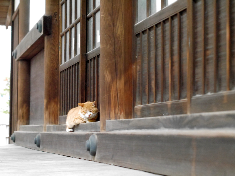 お堂の茶白猫1