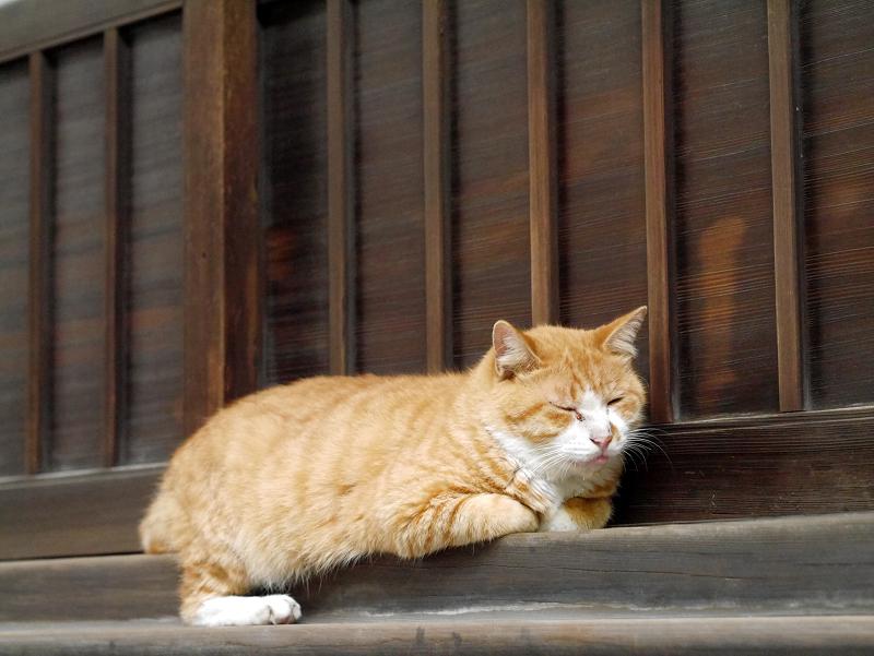 お堂の茶白猫2