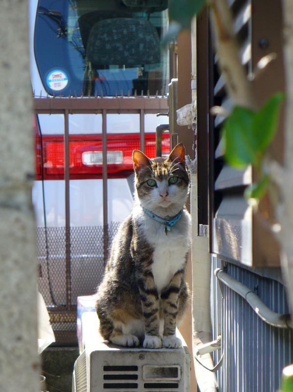 アパート横の室外機とキジ白猫1