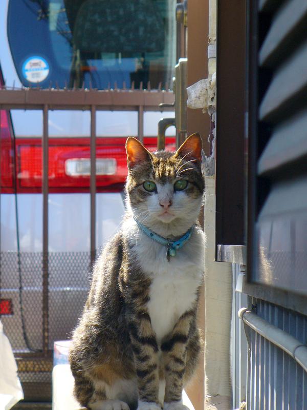 アパート横の室外機とキジ白猫2