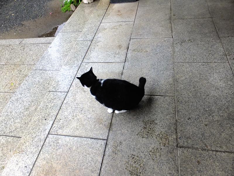 お堂前を歩く黒白猫3