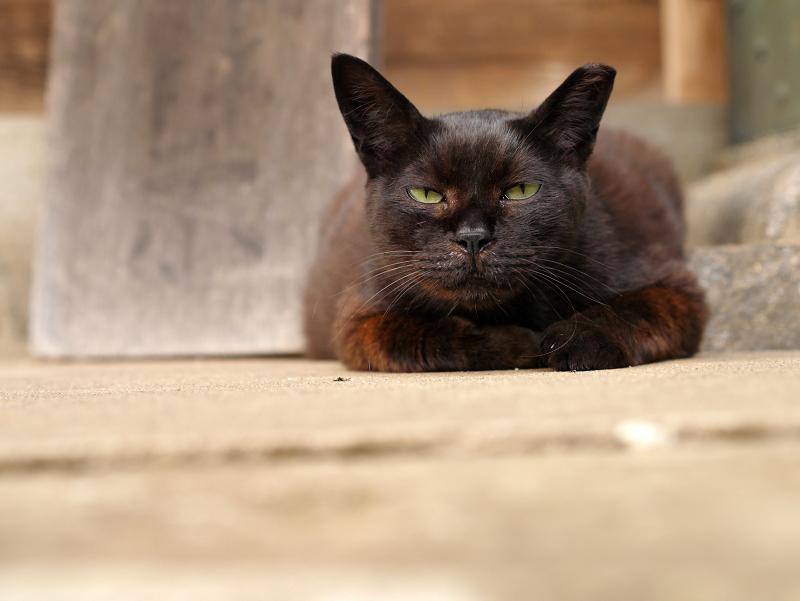 疑心暗鬼黒猫1