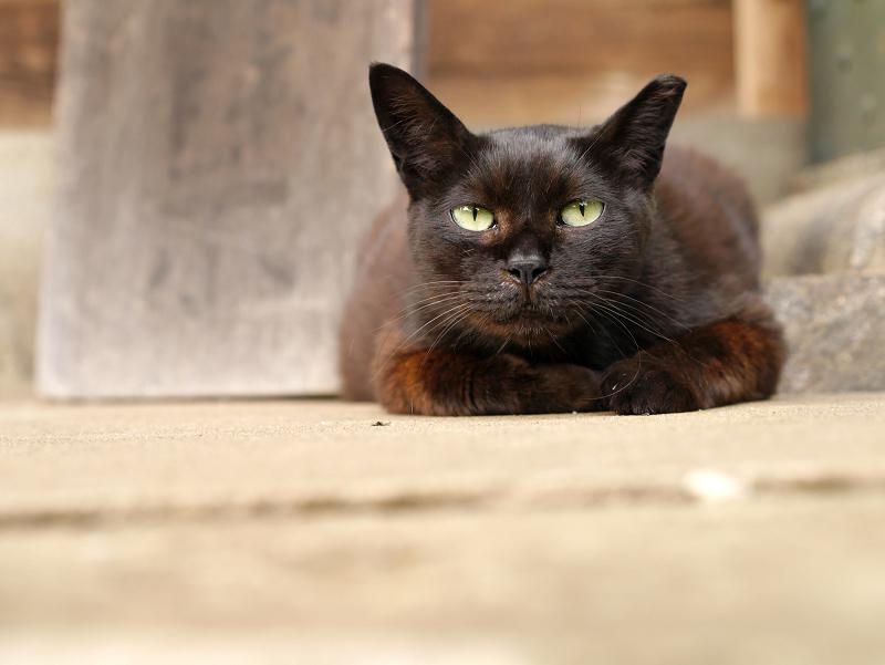 疑心暗鬼黒猫2