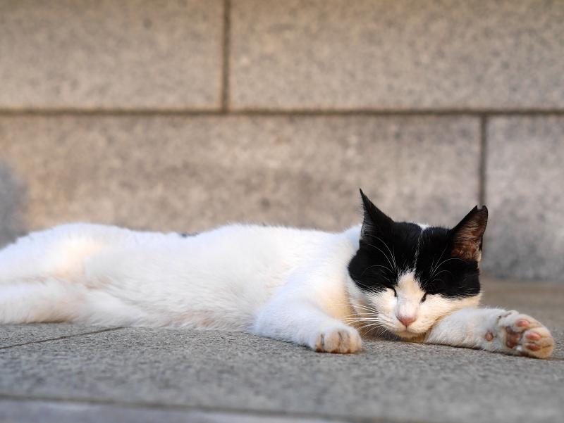 ローアングル白黒猫1