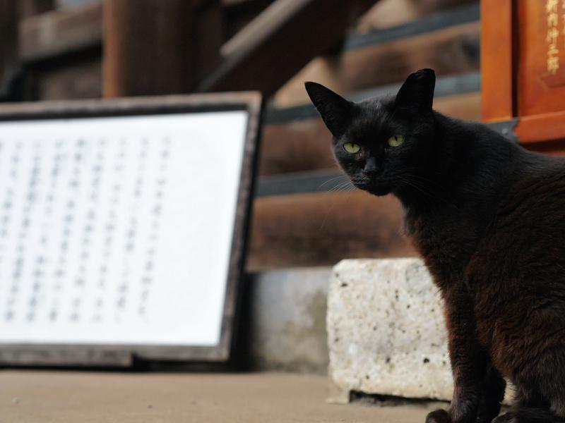 お堂と黒い猫1