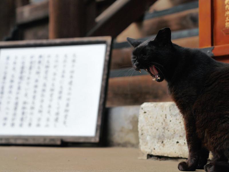 お堂と黒い猫2