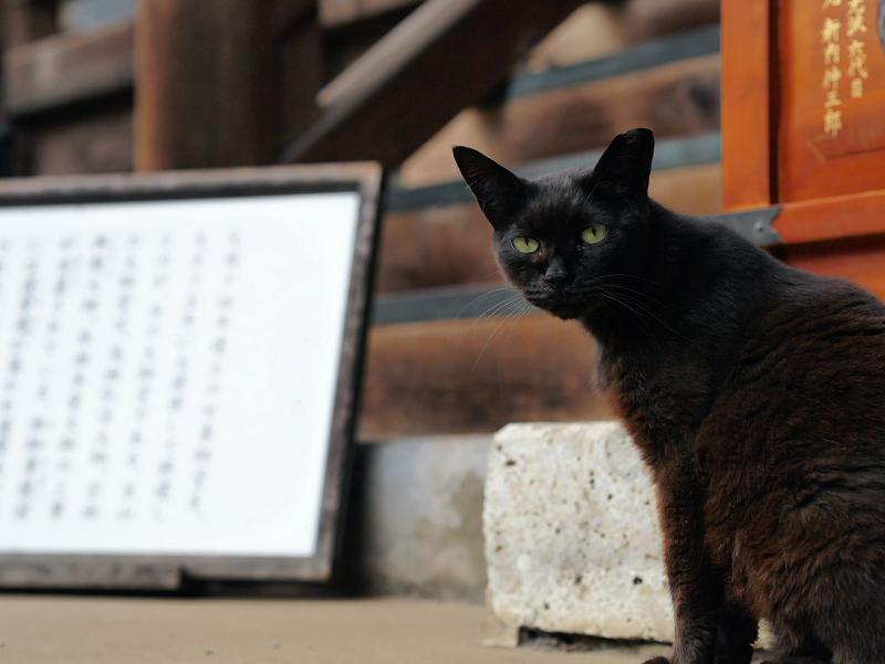 お堂と黒い猫3
