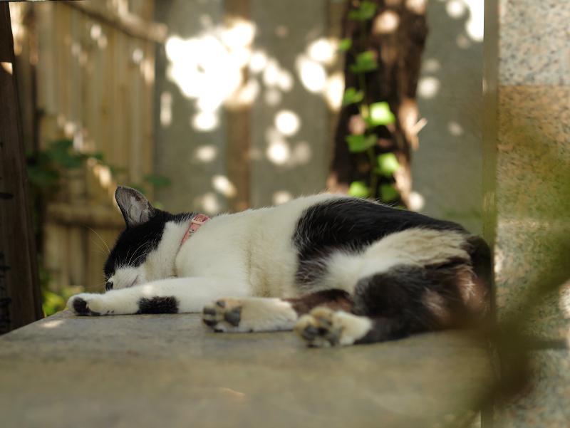 日だまりと白黒の猫