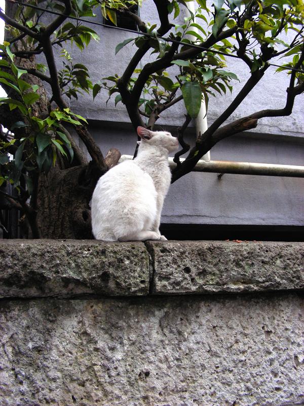 白猫とキジトラ猫1