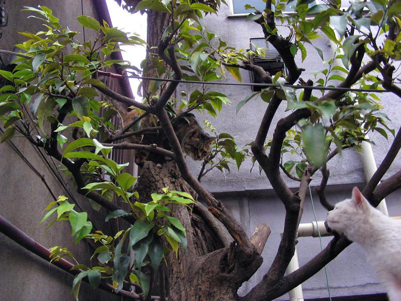 白猫とキジトラ猫2