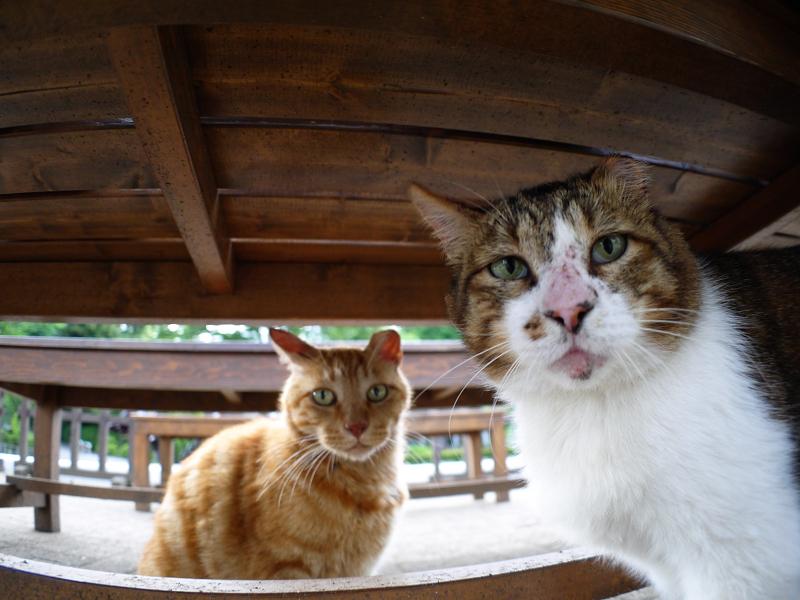 ベンチ下の猫たち