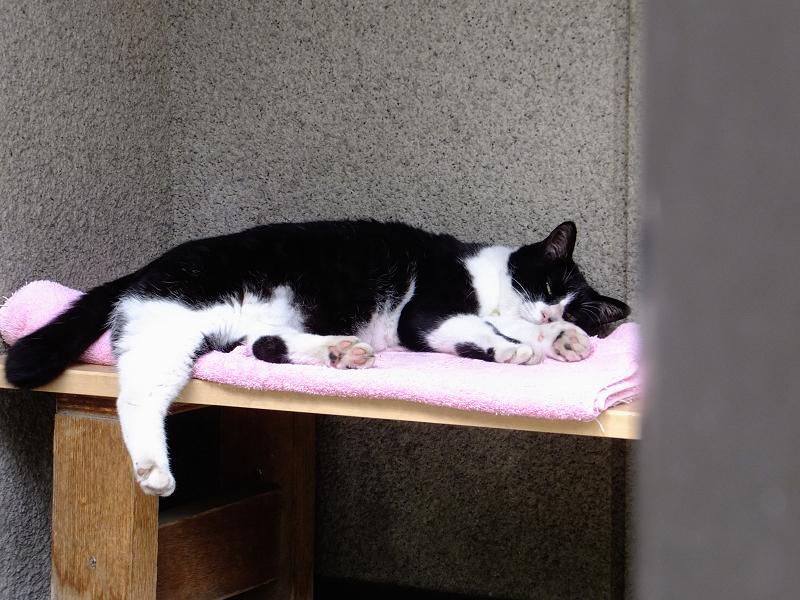 お堂前の黒白猫2