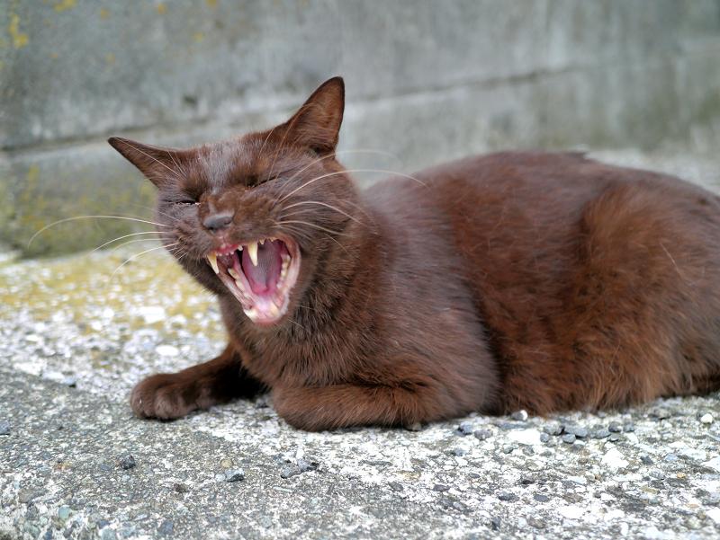 焦げ茶色猫2