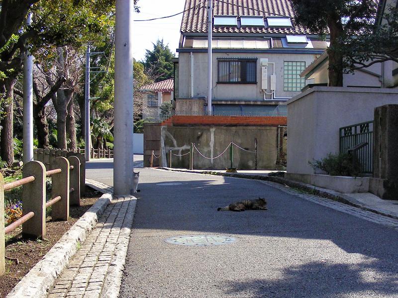 住宅街路上の猫たち1