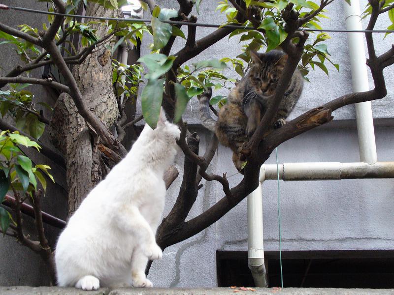 白猫とキジトラの猫2